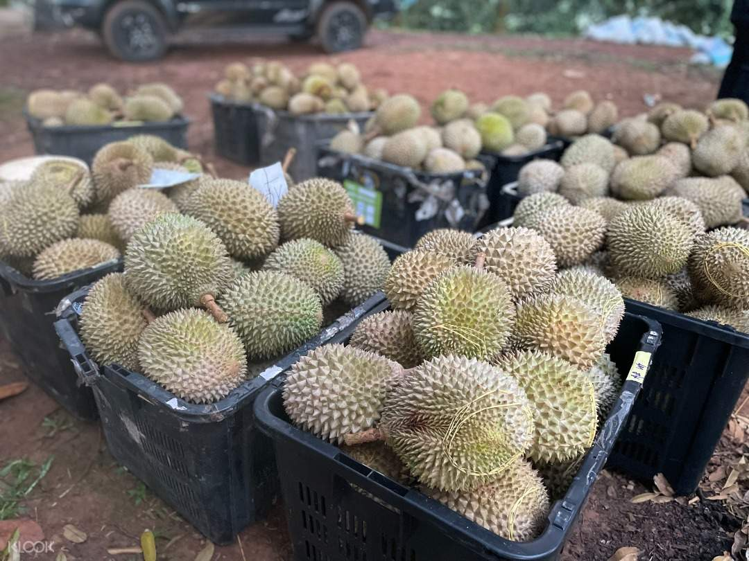 Durian For You